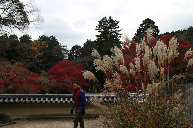 Japanese man enjoys walk in the park with autumn leaves
