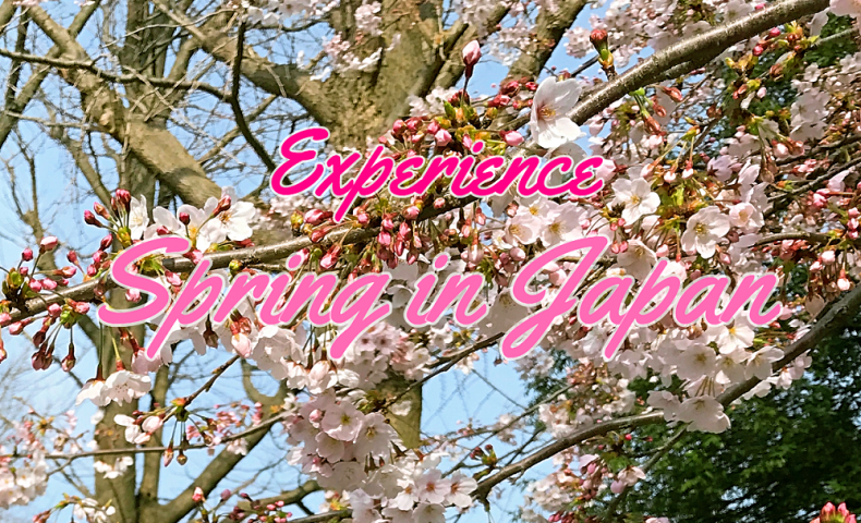 experience-spring-in-japan