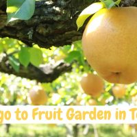 Lets go to fruit garden